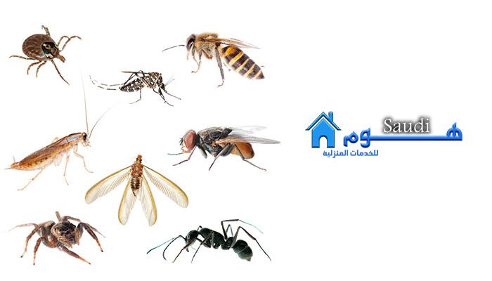 شركة رش مبيدات شرق الرياض 0564205775 افضل شركات ابادة الحشرات المنزلية.