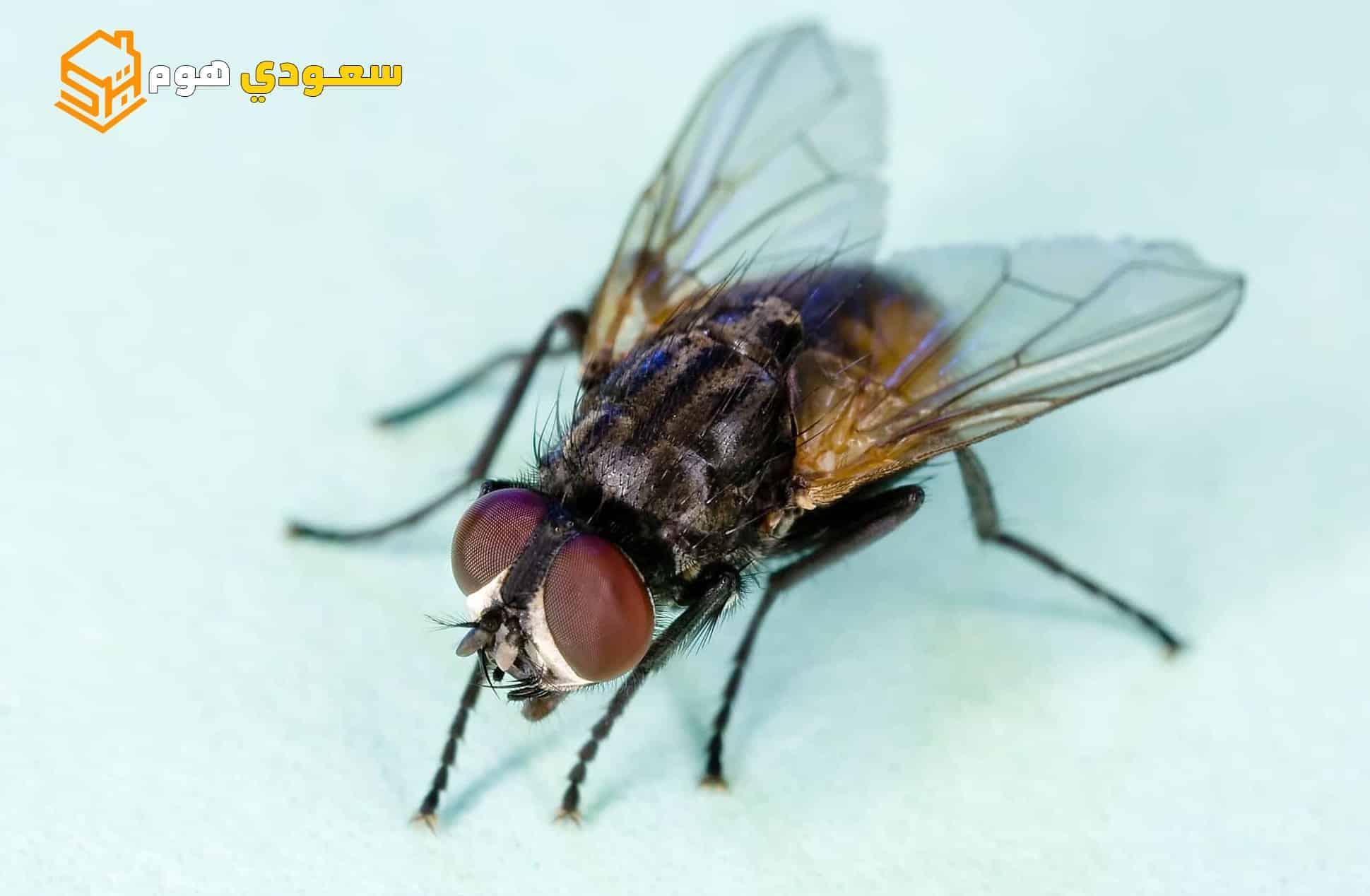 شركة ابادة حشرات بالرياض